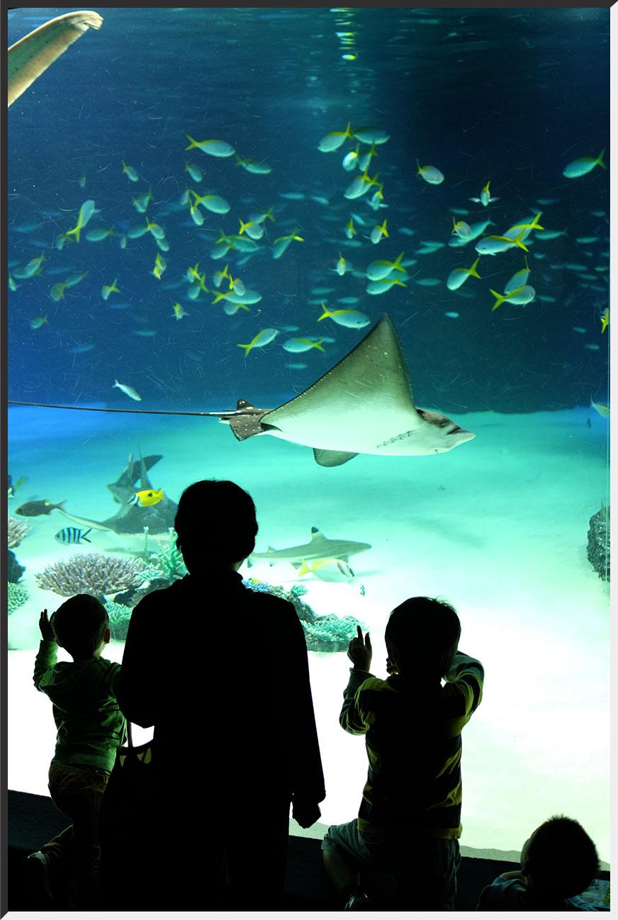 aquarium_140404_02.jpg