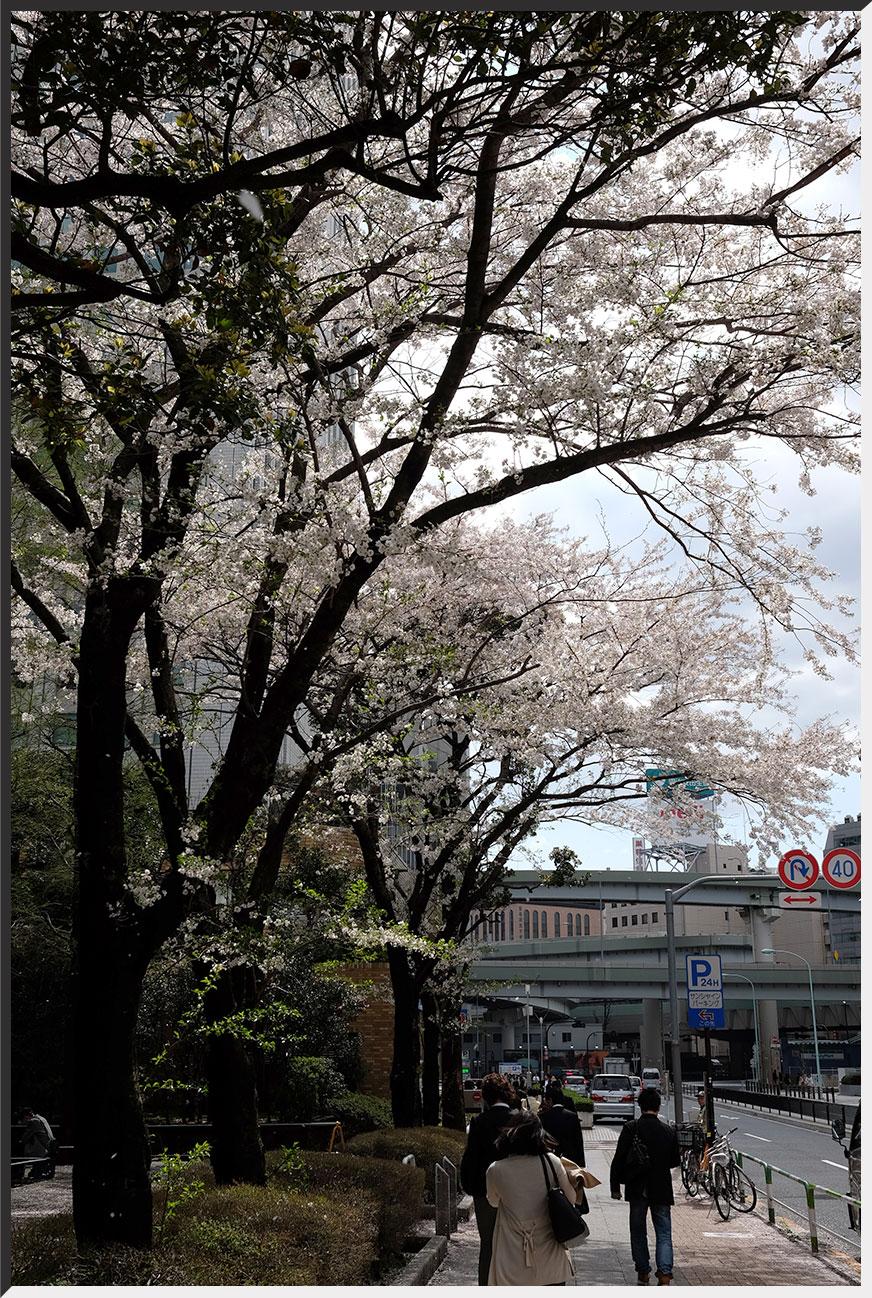 azumatei_140404_03.jpg